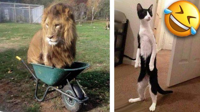 Funny Animals Acting Like Humans! LOLZ